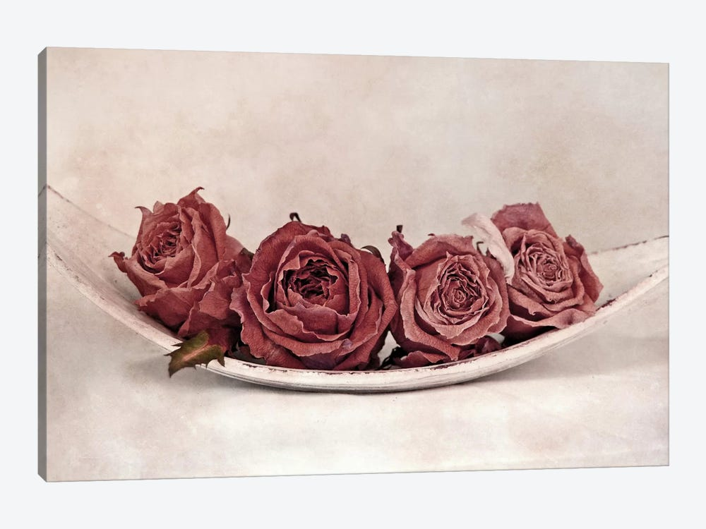 Quartet Of Roses by Claudia Drossert 1-piece Canvas Art Print
