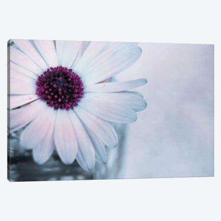 Sain Canvas Print #CDR62} by Claudia Drossert Canvas Artwork