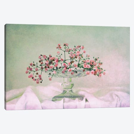 Schleierkraut Canvas Print #CDR63} by Claudia Drossert Canvas Artwork