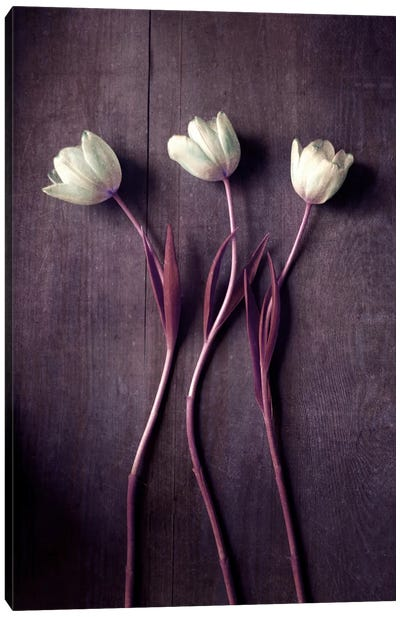 Tulip Dance Canvas Art Print