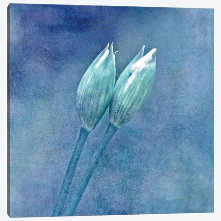 Wild Garlic Canvas Print #CDR77} by Claudia Drossert Canvas Artwork
