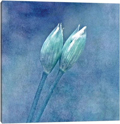 Wild Garlic Canvas Art Print