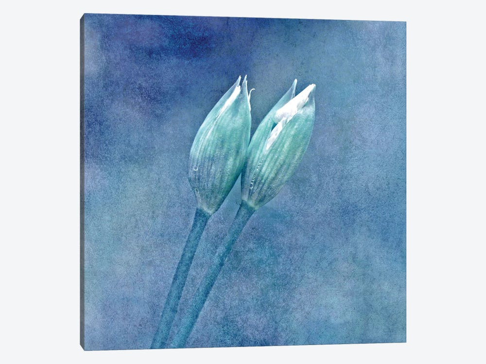 Wild Garlic by Claudia Drossert 1-piece Canvas Print