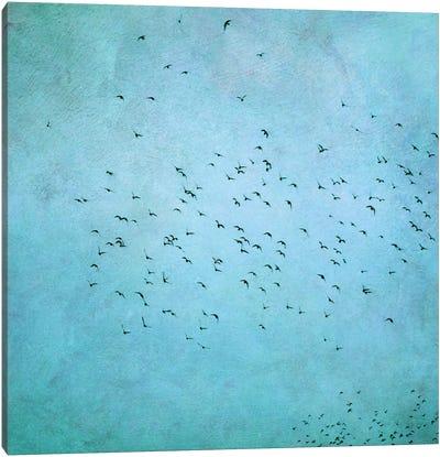 Birds IV Canvas Print #CDR7