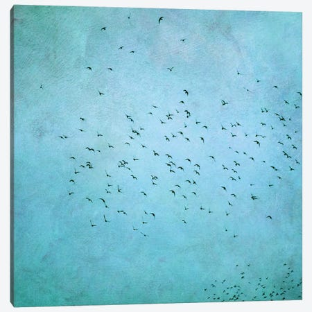 Birds IV Canvas Print #CDR7} by Claudia Drossert Canvas Art Print