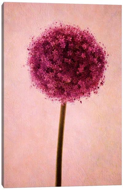 Allium Canvas Print #CDR80