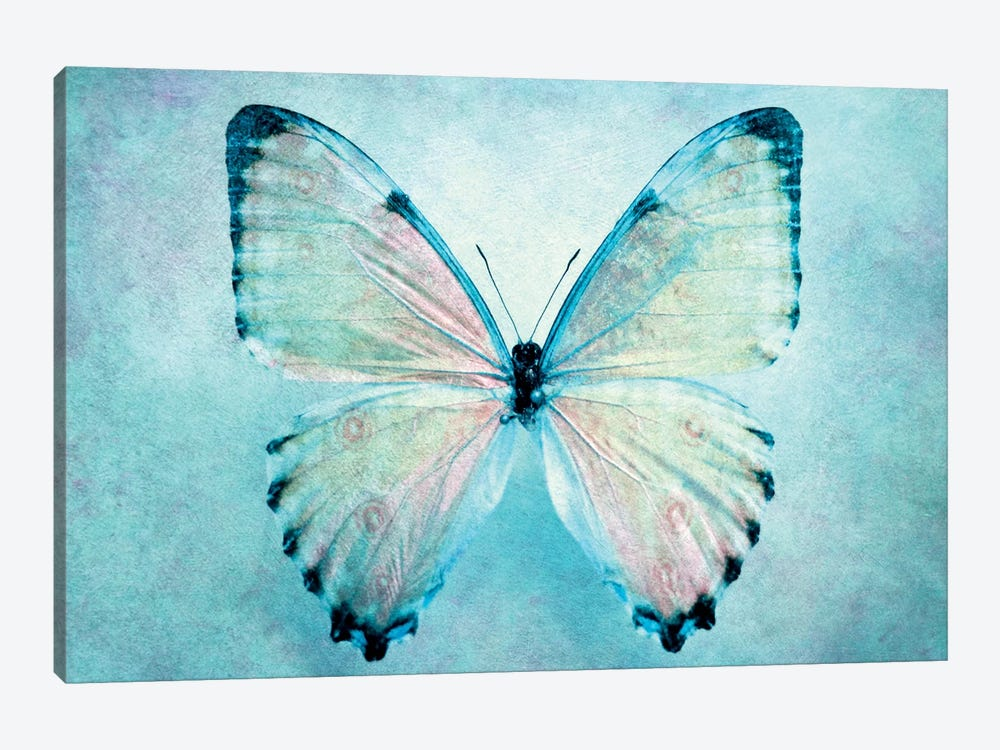 Blue Butterfly by Claudia Drossert 1-piece Canvas Art