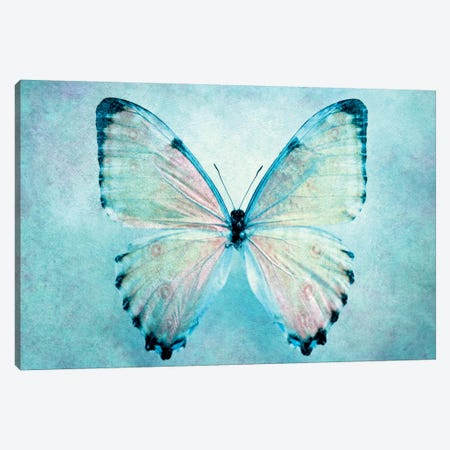 Blue Butterfly 3-Piece Canvas #CDR81} by Claudia Drossert Canvas Wall Art