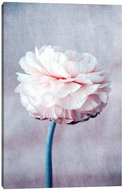 Daydream Canvas Print #CDR82