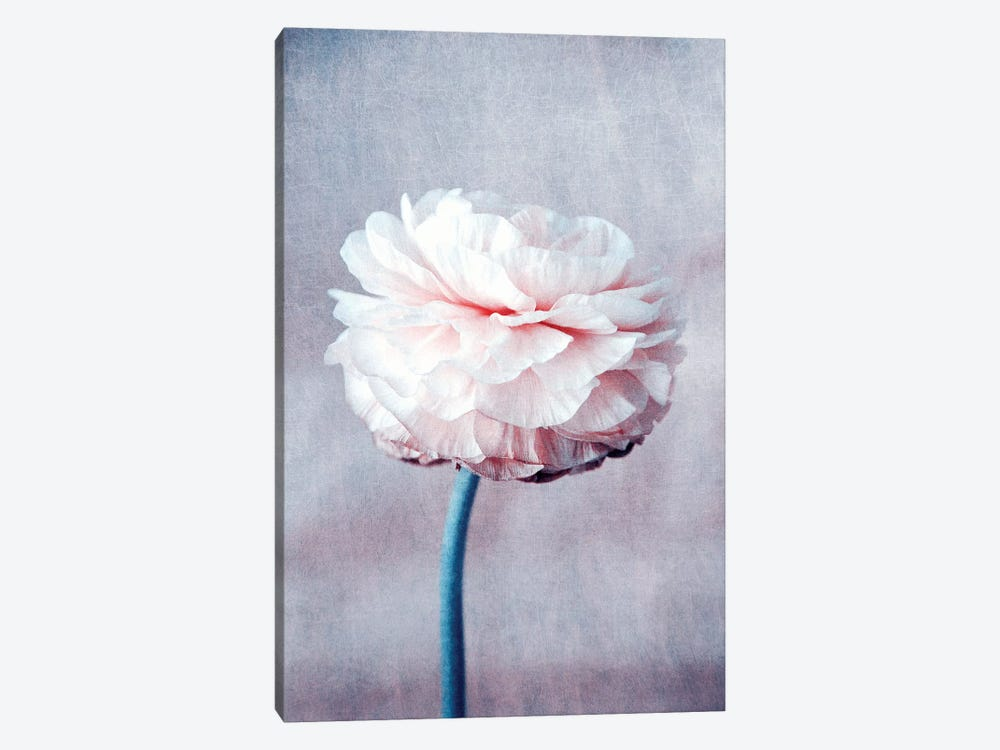 Daydream by Claudia Drossert 1-piece Canvas Print