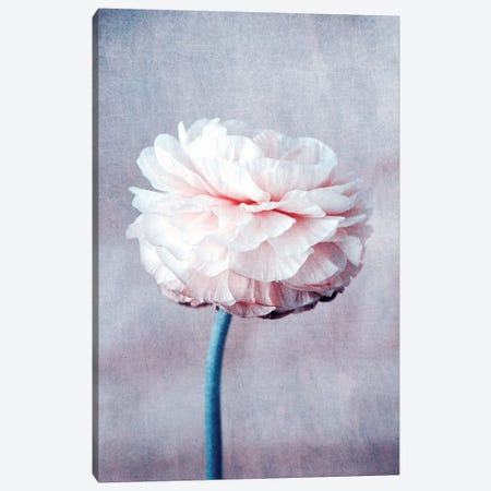 Daydream Canvas Print #CDR82} by Claudia Drossert Canvas Art