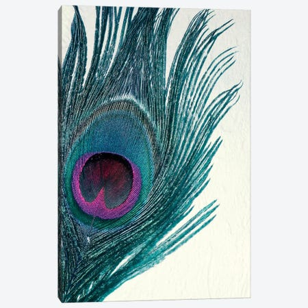 Feather Canvas Print #CDR85} by Claudia Drossert Canvas Print