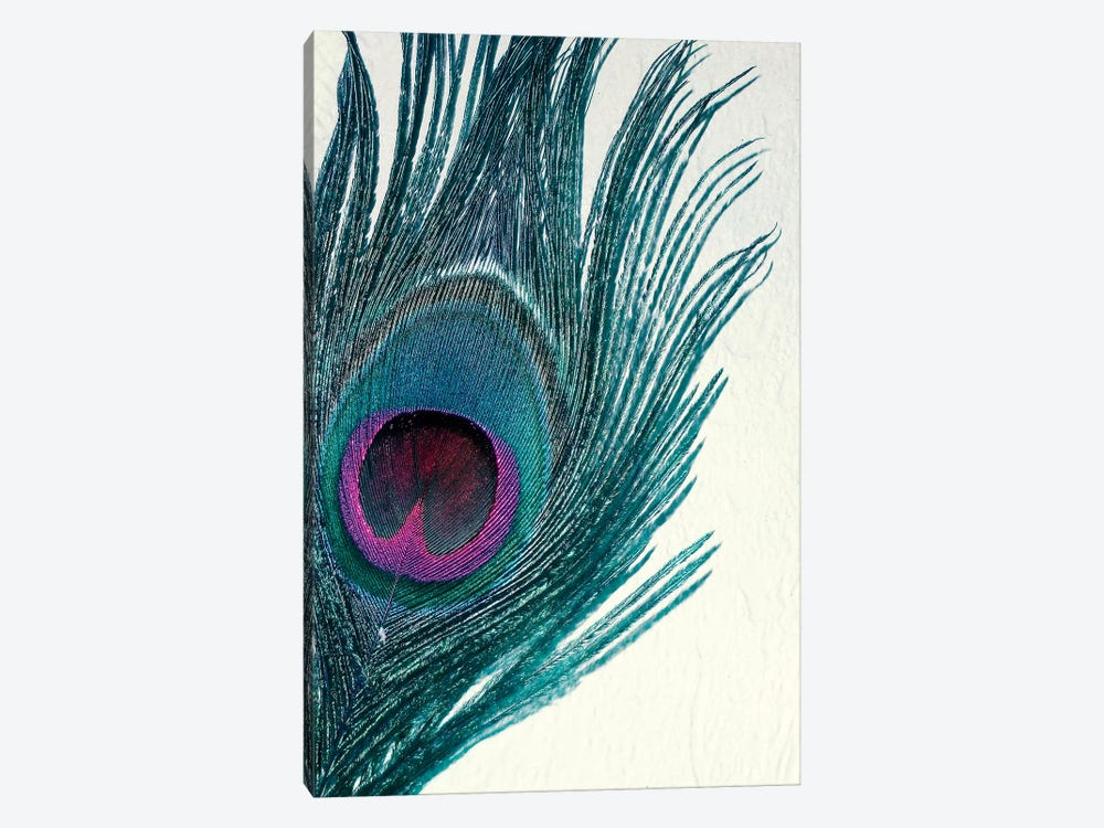 Feather by Claudia Drossert 1-piece Canvas Wall Art