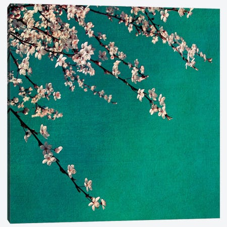 Green Canvas Print #CDR86} by Claudia Drossert Canvas Art Print