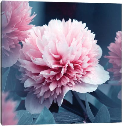 Lovely Canvas Art Print