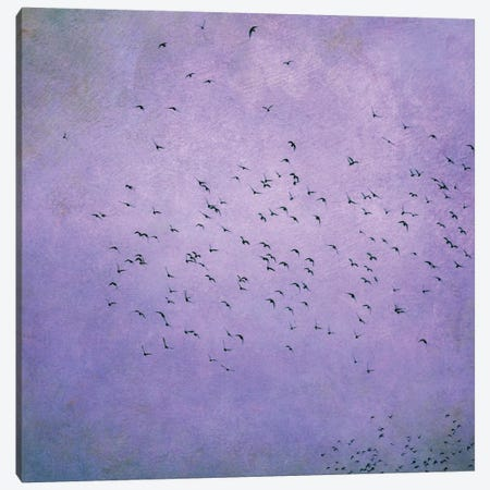 Birds V Canvas Print #CDR8} by Claudia Drossert Canvas Wall Art