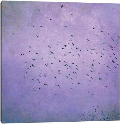 Birds V Canvas Print #CDR8