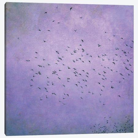 Birds V Canvas Print #CDR8} by Claudia Drossert Canvas Wall Art