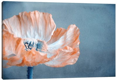 Poppy I Canvas Art Print