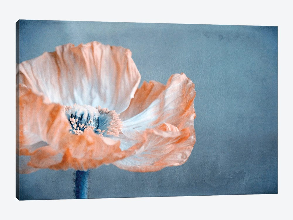 Poppy I by Claudia Drossert 1-piece Canvas Print