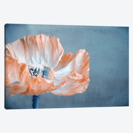 Poppy I Canvas Print #CDR93} by Claudia Drossert Canvas Print