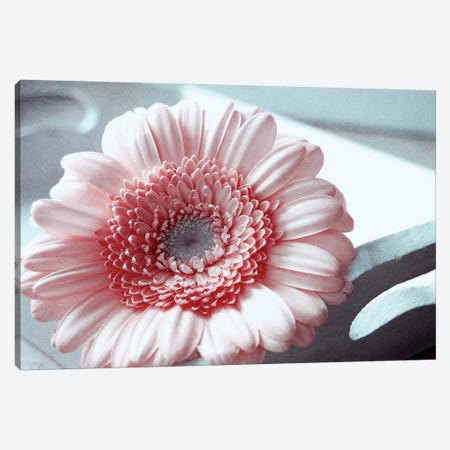 Rose Canvas Print #CDR95} by Claudia Drossert Canvas Art