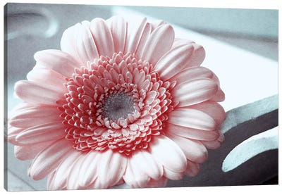 Rose Canvas Print #CDR95