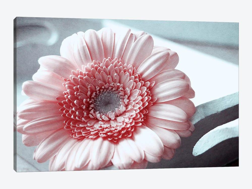 Rose by Claudia Drossert 1-piece Canvas Art Print
