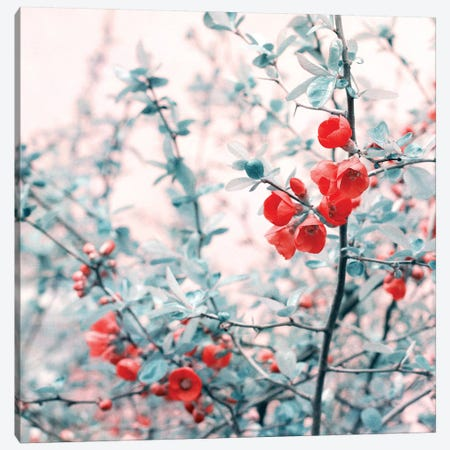Springtime Canvas Print #CDR98} by Claudia Drossert Art Print