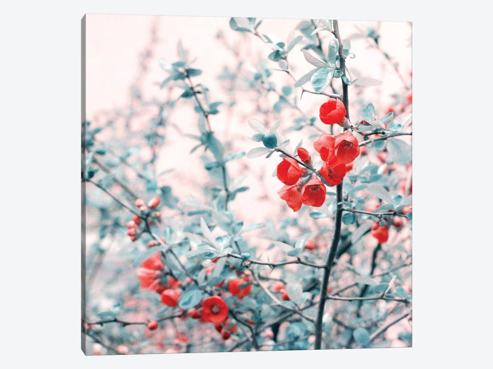 Springtime by Claudia Drossert 1-piece Canvas Wall Art