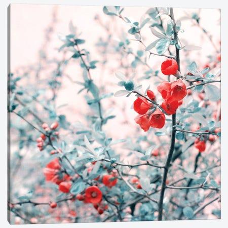 Springtime Canvas Print #CDR98} by Claudia Drossert Art Print