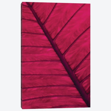 Blatt Canvas Print #CDR9} by Claudia Drossert Canvas Art