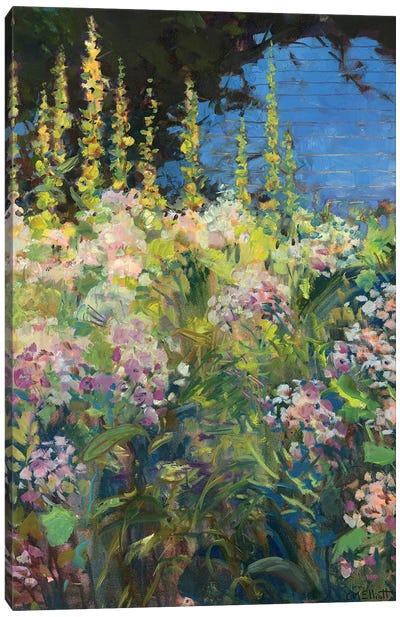 Hollyhocks Canvas Art Print