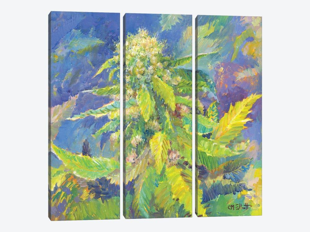 Strawberry Cough by Catherine M. Elliott 3-piece Canvas Art