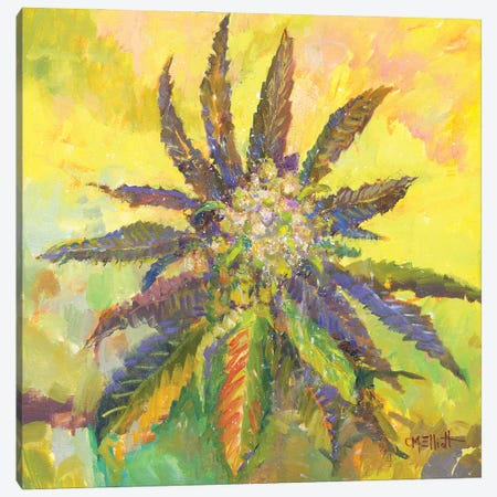 Willie Weed Canvas Print #CEI30} by Catherine M. Elliott Canvas Print
