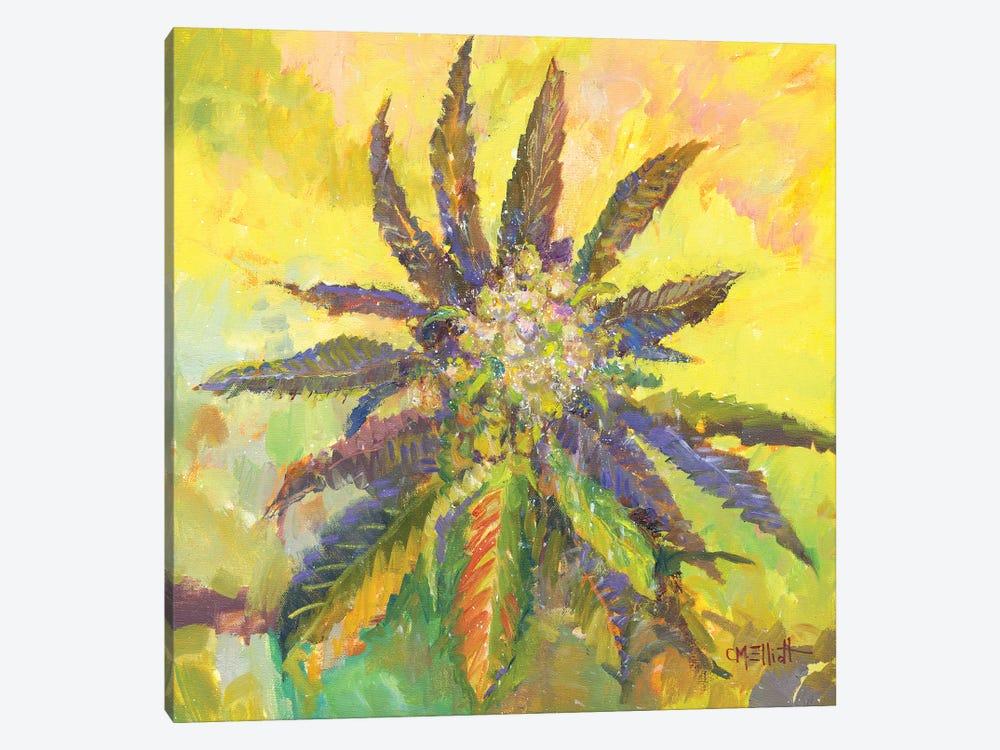 Willie Weed by Catherine M. Elliott 1-piece Canvas Wall Art