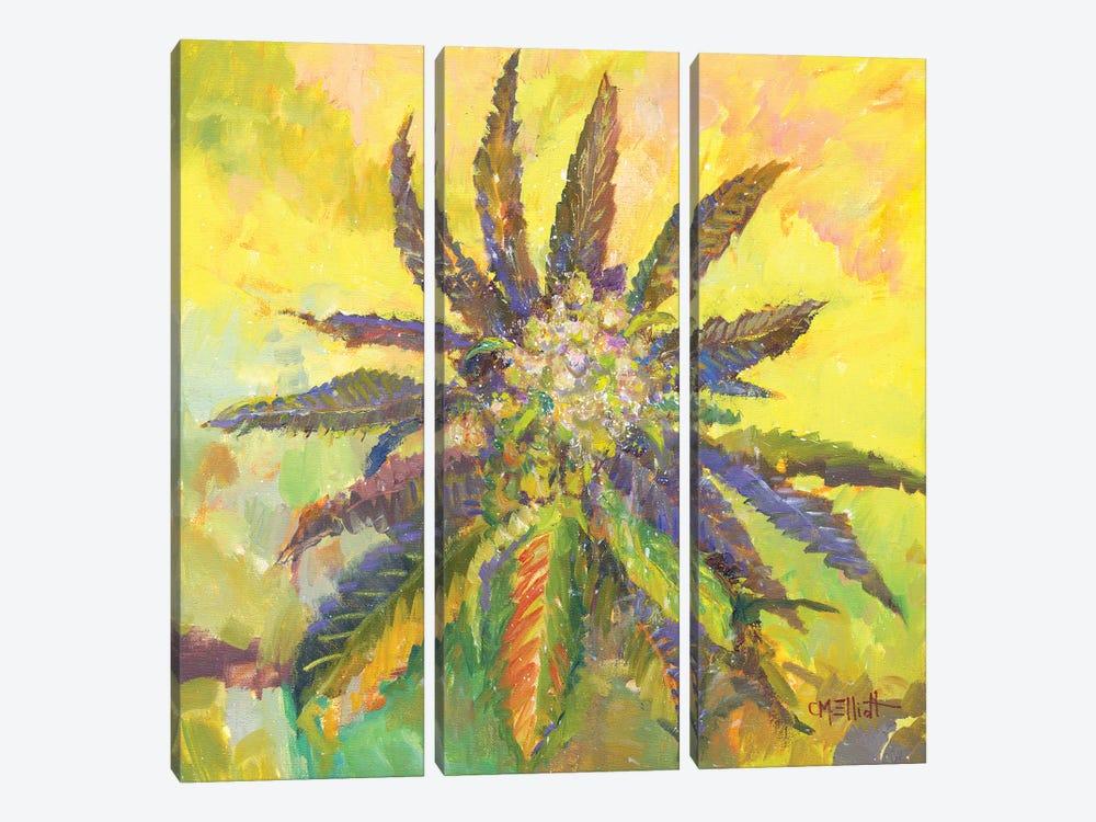 Willie Weed by Catherine M. Elliott 3-piece Canvas Art
