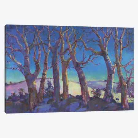 Winter Trees Canvas Print #CEI31} by Catherine M. Elliott Canvas Print