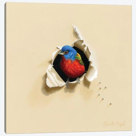 Dazzling Drop-In Canvas Print #CEN18} by Camille Engel Canvas Art