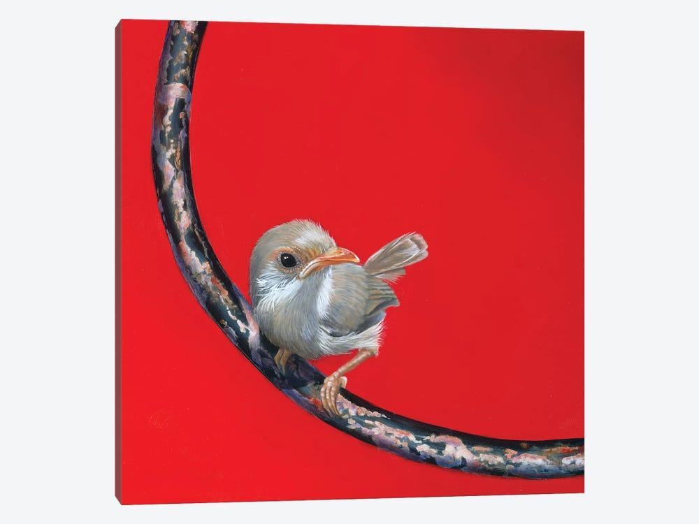Faery Wren by Camille Engel 1-piece Canvas Wall Art