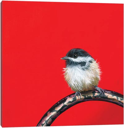 Little Chickadee II Canvas Art Print