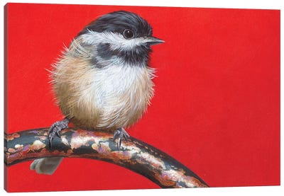 My Little Chickadee Canvas Art Print