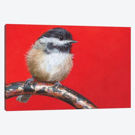 My Little Chickadee Canvas Print #CEN42} by Camille Engel Canvas Art Print
