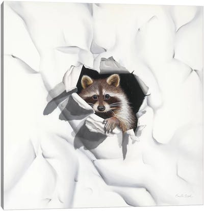 Racoon - Little Rascal Canvas Art Print