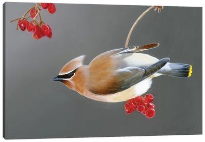 Berry Bandit Canvas Art Print