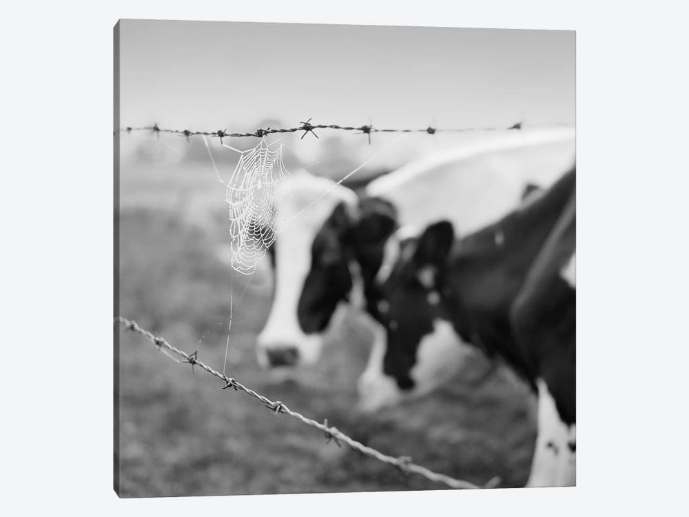 Holstein Cow by Chip Forelli 1-piece Canvas Art