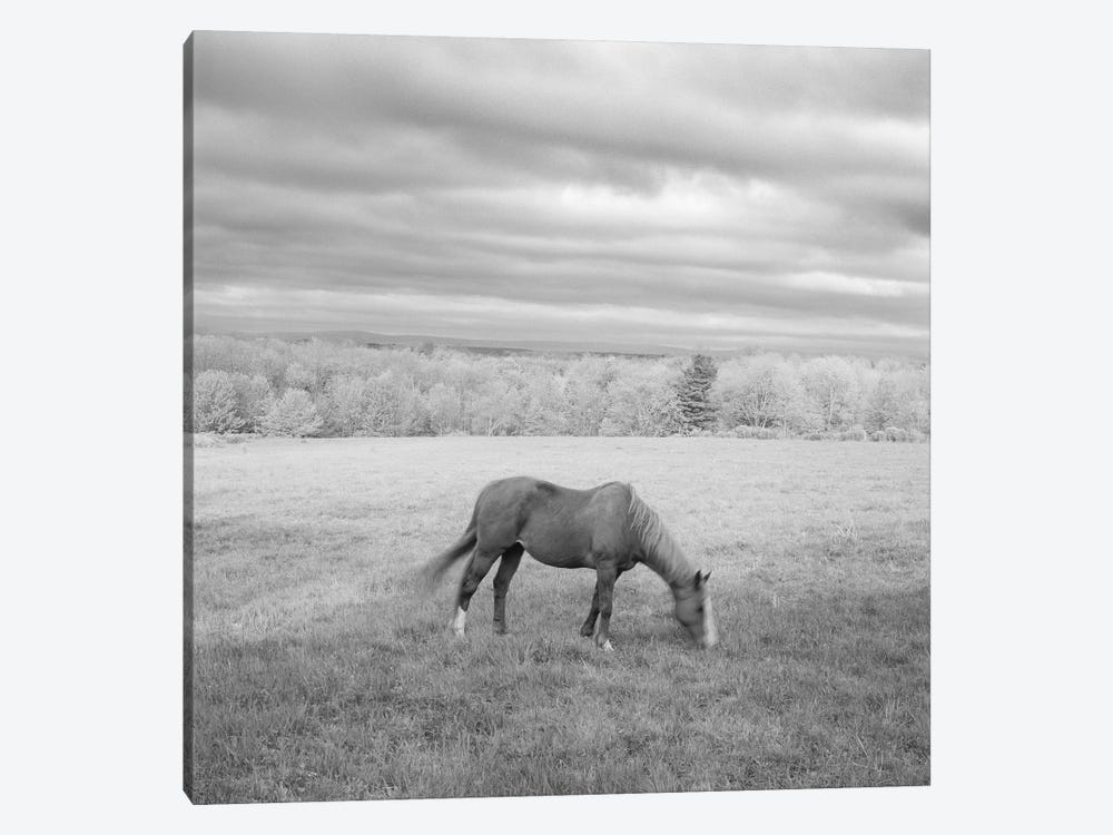 Lone Horse by Chip Forelli 1-piece Canvas Print