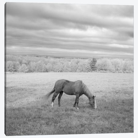 Lone Horse Canvas Print #CFO5} by Chip Forelli Canvas Art Print