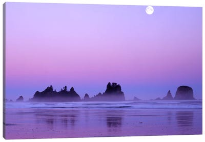 Magnificent Sunset With Full Moon, Point Of Arches, Shi Shi Beach, Olympic National Park, Washington, USA Canvas Art Print