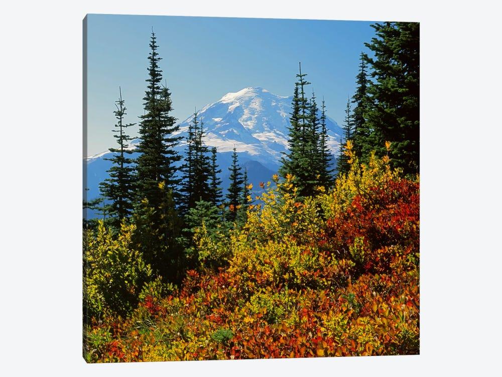 Mount Rainier With An Autumn Landscape In The Foreground, Mount Rainier National Park, Washington, USA by Charles Gurche 1-piece Canvas Art